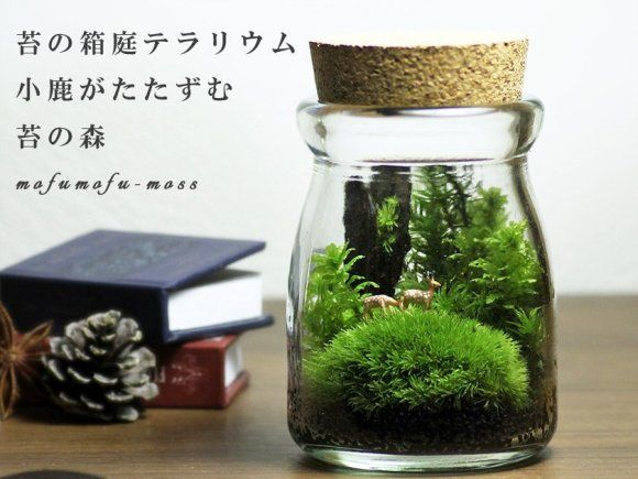 Add A Little Green To Your Life: Green Moss Terrariums Are The New Zen  Gardens   Japan Today