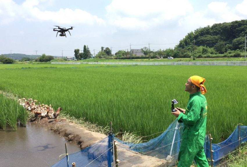 How drones are changing the rice industry - Japan Today