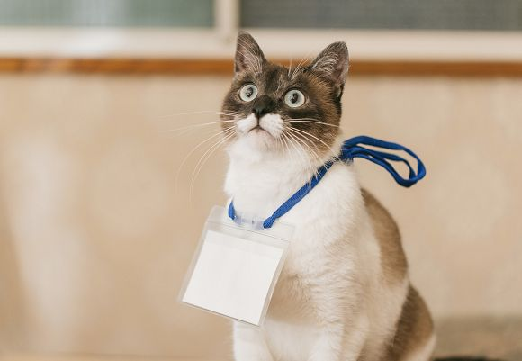 Japan's top 10 cat names so far for 2017 - Japan Today